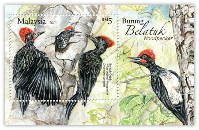 Woodpecker MS
